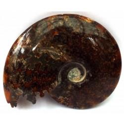 Fossilised Ammonite Polished Specimen 02