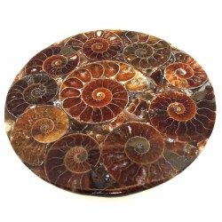 Fossilised Ammonite Coaster